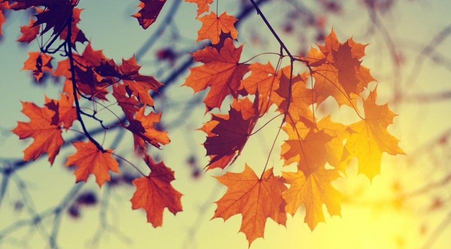 Znalezione obrazy dla zapytania wrzesień